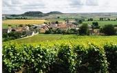 Wijngaard in Massigny, ten noorden van Chatillon sur Seine