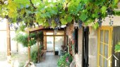Burgundy grapes growing on the terrace