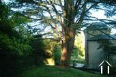 De cederboom